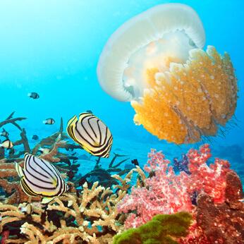 In einem Auquarium einer Zoohandlung sind die unterschiedlichsten Meerestiere zu sehen.