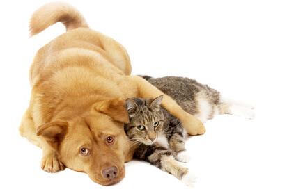 Ein Hund und eine Katze warten darauf, dass ihnen ihr Herrchen Futter aus der Zoohandlung besorgt.